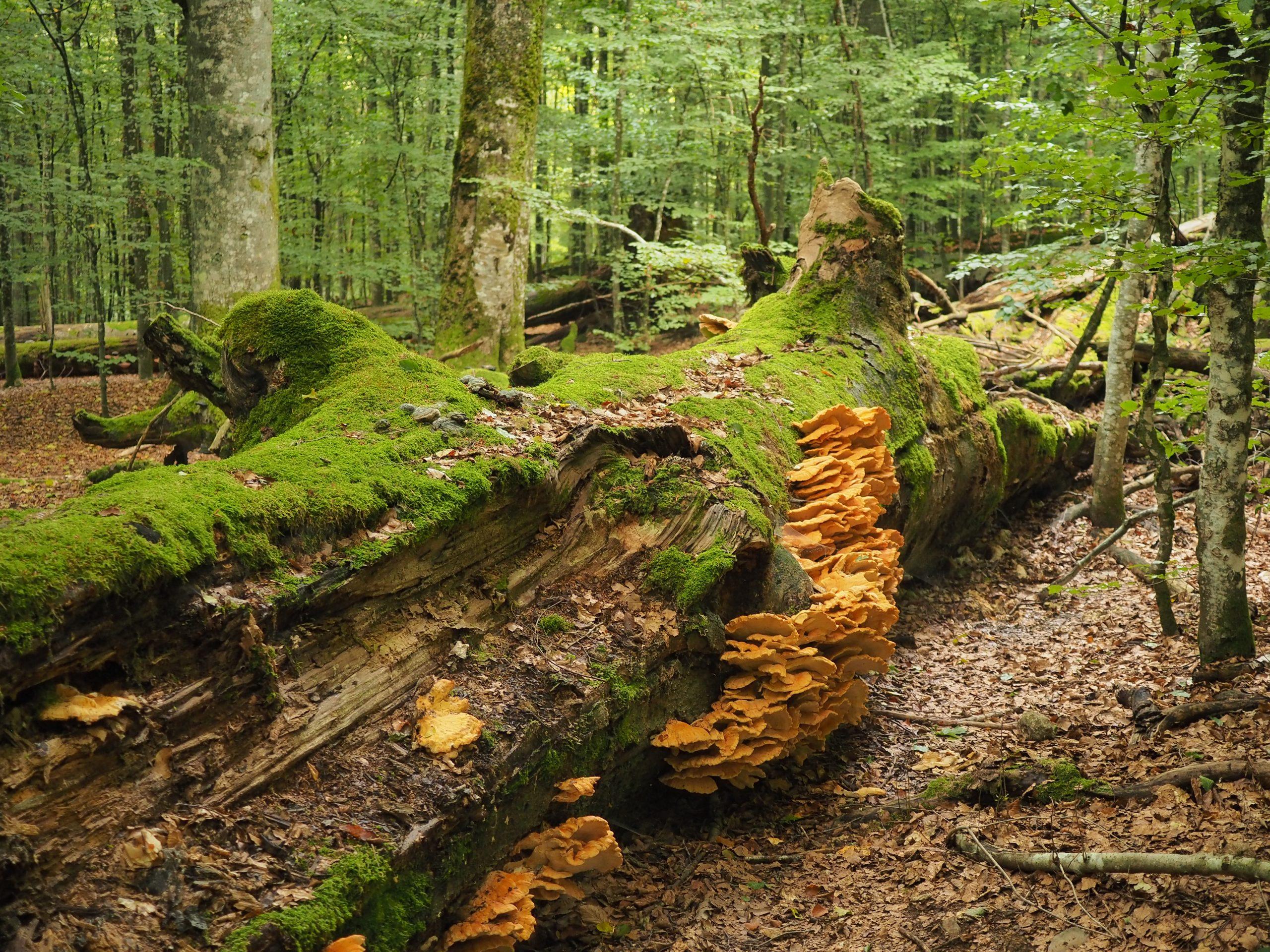 Franz Leibl/Nationalpark Bayerischer Wald